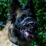 Comfortable Belgian Tervuren Dog Muzzle with Rubber Coating