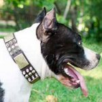 Dog Collars UK for American Staffordshire Terrier Royal Style