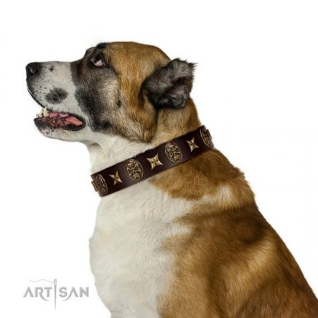 """Captain Hook"" Chocolate Brown Leather Dog Collar FDT Artisan"