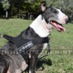 Bestseller English Bull Terrier Harness UK for Stop Dog Pulling