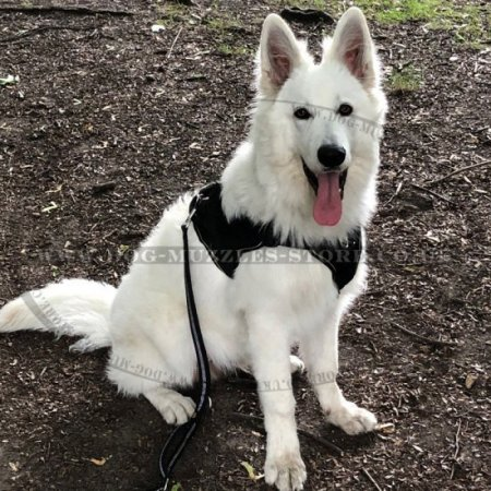 Nylon Dog Harness with Handle and Padded Triangle Chest Plate