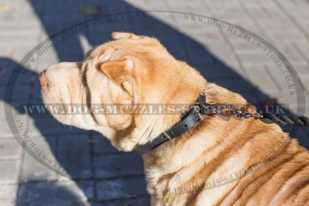 Strong Leather Dog Collar For Shar Pei With Half-Spheres