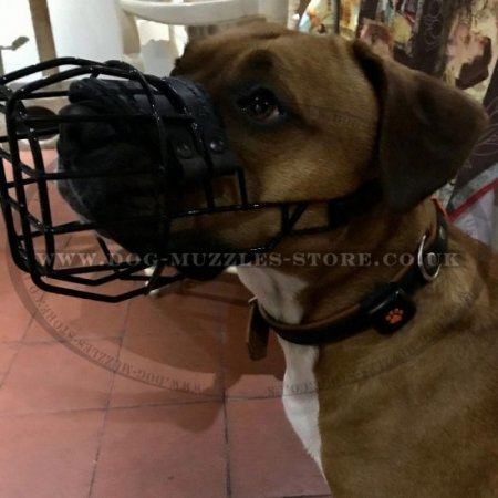 Dog Muzzle for Staffordshire Bull Terrier & Amstaff Muzzle Size