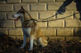 """Quiet Breathing' Extra Durable Choke Collar For Husky Training"