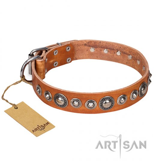 Best Studded Dog Collar FDT Artisan 'Daily Chic'
