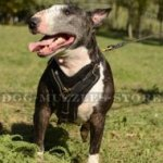 Bestseller English Bull Terrier Leather Dog Harness UK