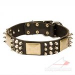 Amazing Dog Collar with Brass and Nickel Plated Decorations