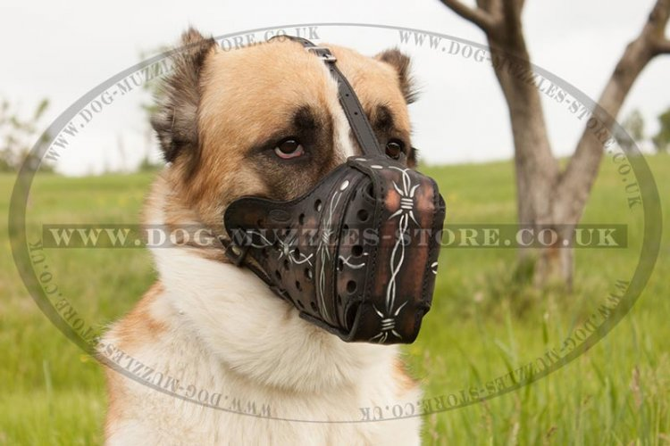 Central Asian Shepherd Painted Strong Dog Muzzle, Leather