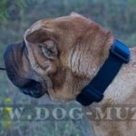 Easy & Durable Nylon Shar Pei Collar with Plastic Quick Release