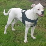 Best American Bulldog Harness to Prevent Pulling on a Leash