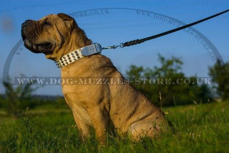 Fascinating White Leather Dog Collar For Shar Pei With Studs