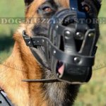 Leather Dog Muzzle | Belgian Malinlois Muzzle Bestseller UK