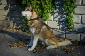 """Gift From Egypt"" Enchanting Dog Collar For Siberian Husky"
