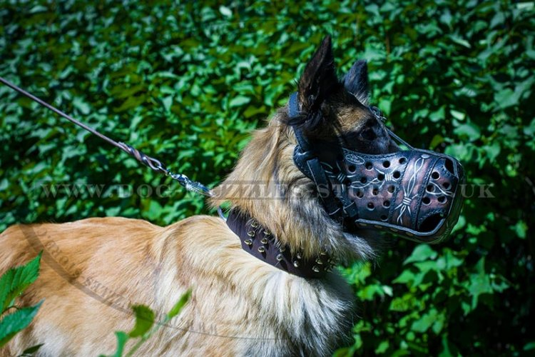 The Best Dog Training Muzzle for Active Tervuren Dogs