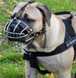Wire Basket Dog Muzzle for Boerboel Mastiff UK Bestseller