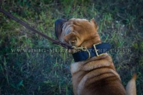 """King Style"" Tough Leather Dog Collar For Shar Pei 3"" Width"