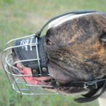 American Bulldog Muzzle Padded | Wire Dog Muzzle for Bulldog