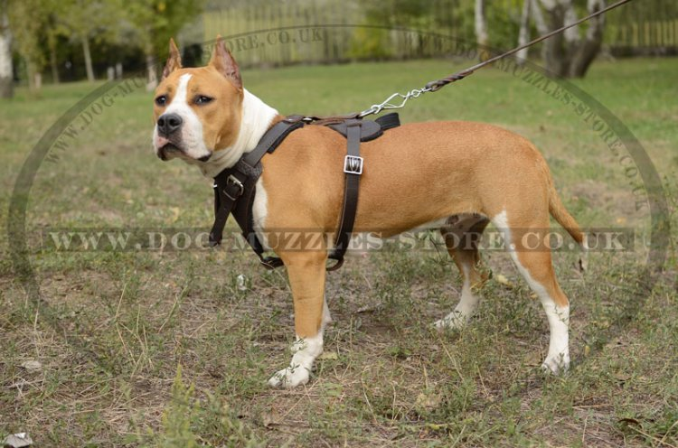 Strong Padded Dog Harness For Staffordshire Bull Terrier