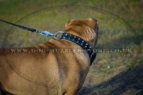 Adorable Shar Pei Dog Collar With Silver-Like Spikes 1.6 In