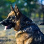 Great Spiked Dog Collar for German Shepherd