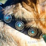 Super Design of Dog Collars for German Shepherd, UK Bestseller!