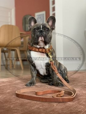 The Best Leather Dog Lead for Medium and Large Dog Breeds 2-6 ft