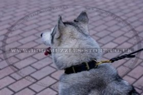 Luxurious Brass Studded Dog Collar For Siberian Husky