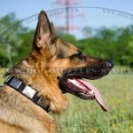 Strong Nylon Dog Collars with Plates for GSD Style