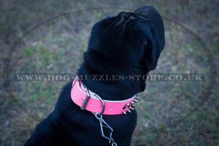 Original Style of Shar Pei Collar with Spikes and Studs