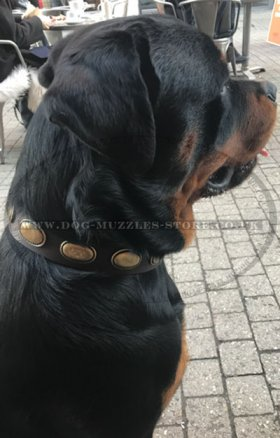 Fashion Dog Collar | Studded Designer Dog Collar