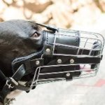 Amstaff Dog Muzzle Size with Leather Padded Basket