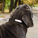 ID Tagged Dog Collar for Strong Mastiff Dog Walking and Training