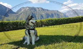 The Best No Pull Dog Harness for Husky Walking and Training