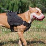 Pitbull Harness with Handle | Nylon Dog Harness for Pitbull