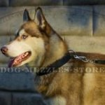 Strong Nylon Dog Collar for Siberian Husky