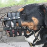 Royal Nappa Padded Dog Muzzle for Swiss Mountain Dog