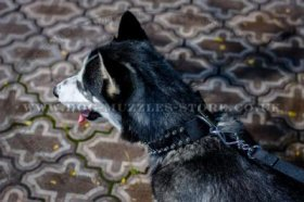 Stylish Double Ply Nylon Dog Collar For Siberian Husky
