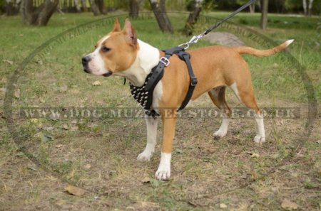 Best Walking Harness For Staffy With Nickel-Plated Spikes