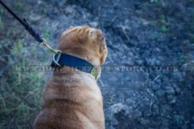 """Gorgeous"" Tear-Proof Dog Collar For Shar Pei UK 1.6"" (4 cm)"