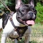 Gorgeous French Bulldog Harness Leather Design