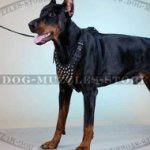 Dog Harness with Pyramid Decorations | Leather Dog Harness