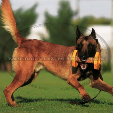 Yellow Dog Training Dumbbell for IGP