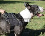 Quality Nylon Dog Harness for English Bull Terrier UK Bestseller