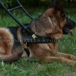 Best Guide Dog Harness for German Shepherd