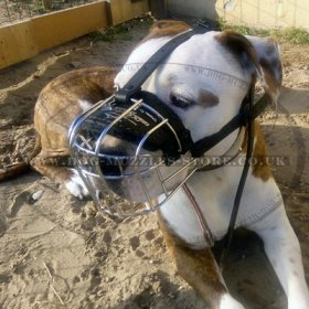 Staffie Muzzles Basket Form - Dog Muzzles That Allow Drinking