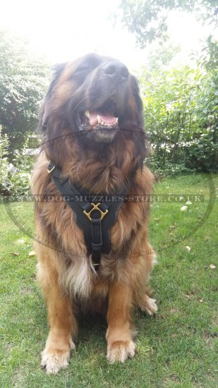 Favorite Large Leather Dog Harness UK Best Seller