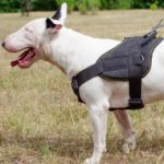 Bull Terrier Harness for Sale | Best Dog Harness with Handle