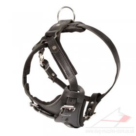 Padded Leather Spaniel Dog Harness UK Bestseller