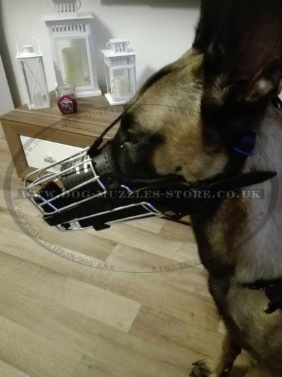 Belgian Malinois Leather Muzzle for Agitation and Biting