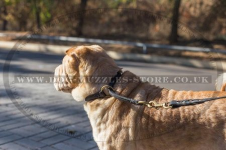 The Best Collar for Shar Pei Training, Round Leather Choker